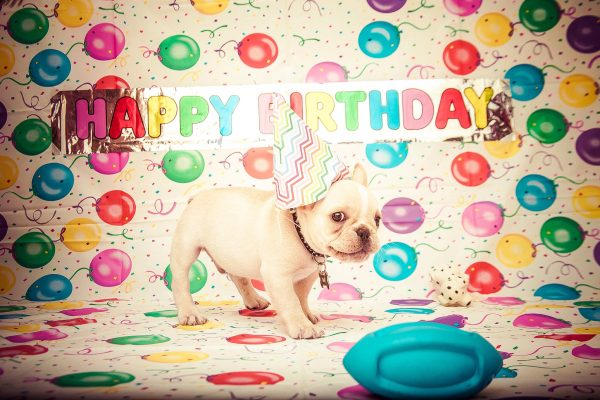 Happy Birthday eCard showing a small puppy wearing a birthday hat